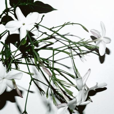 Imagem 3 do produto Elksis - Creme corporal hidratante -