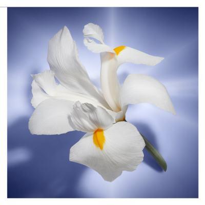 Imagem 7 do produto La Vie Est Belle Lancôme - Perfume Feminino - Eau de Parfum - 30ml